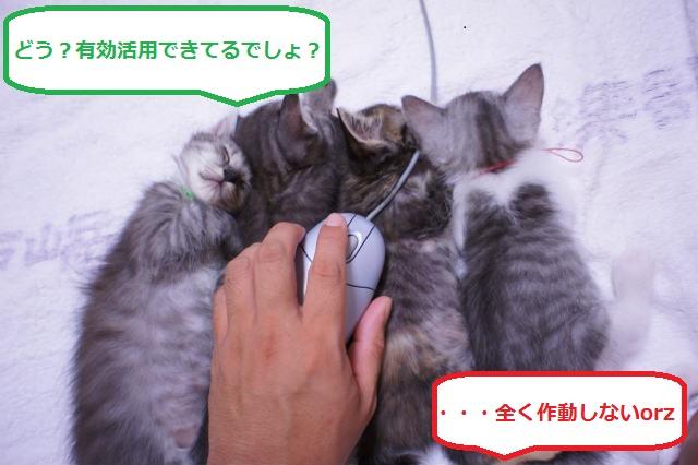 MT4_mail1